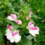 bloemen wandelen Menorca