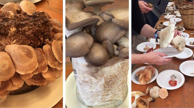 paddenstoelen menorca esclata sangs